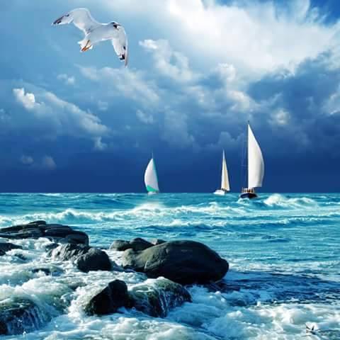 mar-vaixells-i-gavines